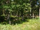 The Woods Tract #9 Pomme de Terre Lake Acreage for Sale